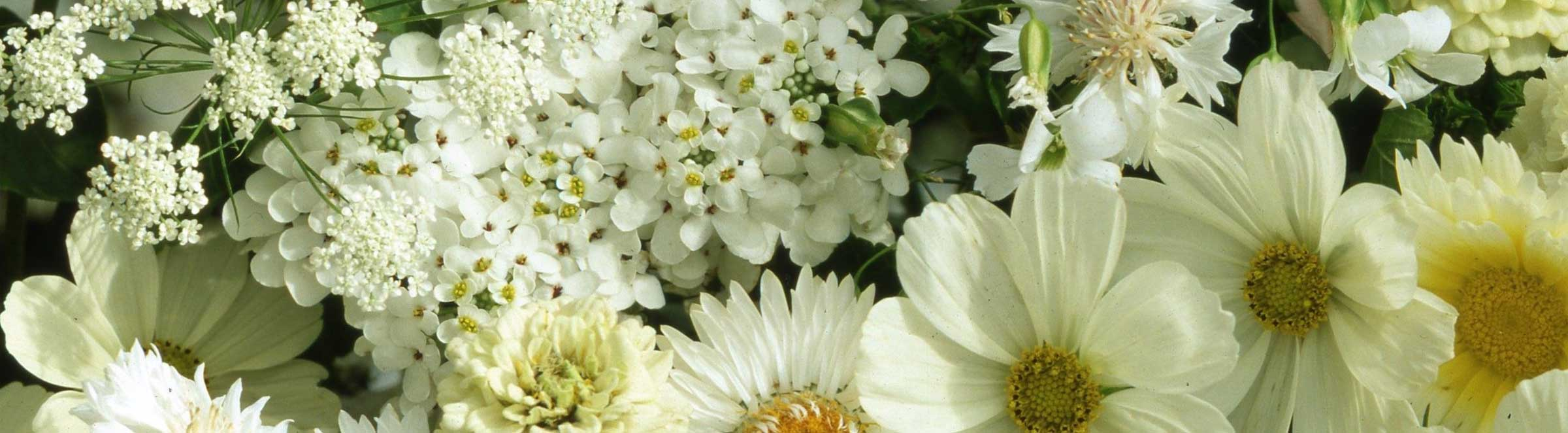 image of white flowers